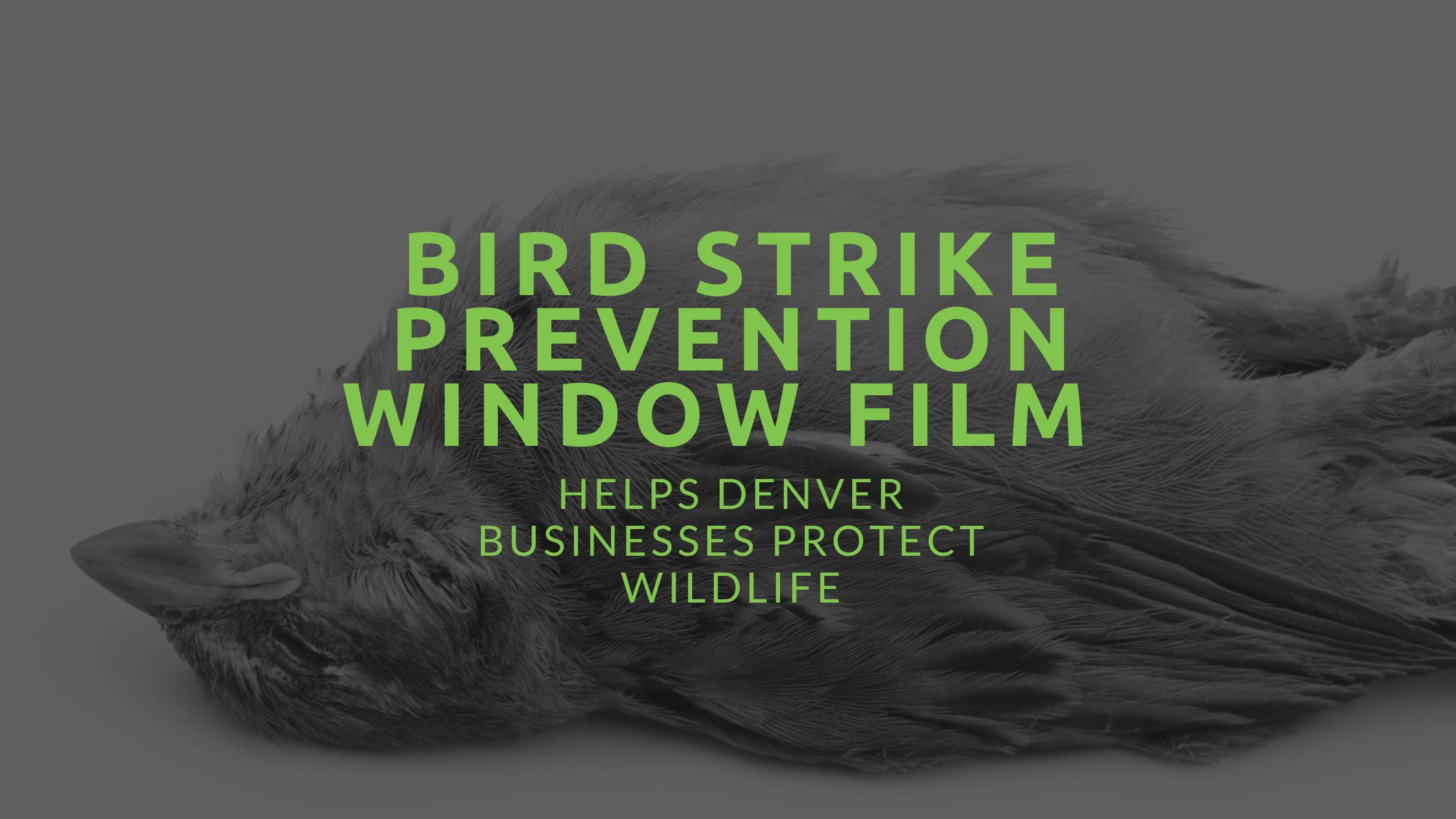 bird strike prevention window film denver
